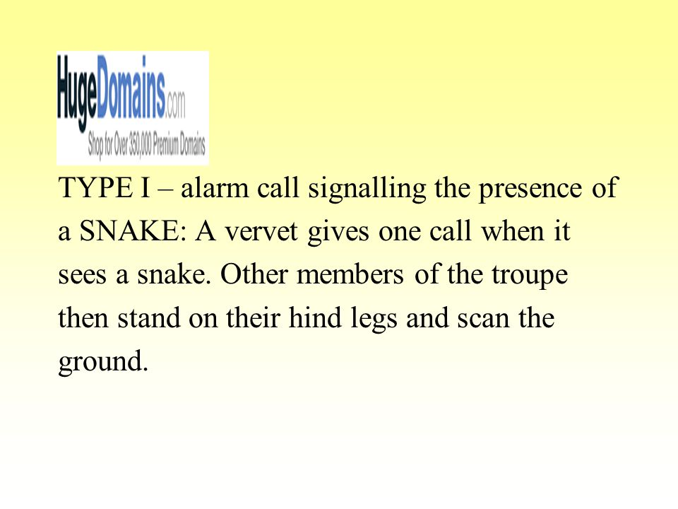 TYPE I – alarm call signalling the presence of a SNAKE: A vervet gives one call when it sees a snake. Other members of the troupe then stand on their