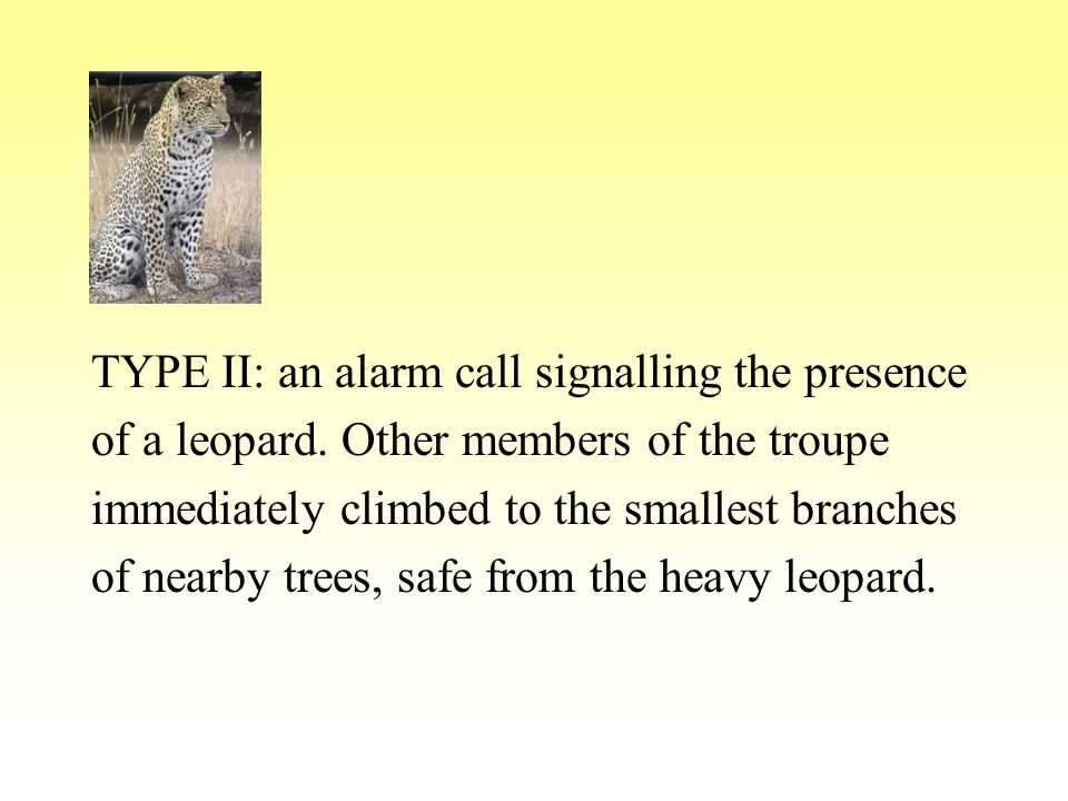 TYPE II: an alarm call signalling the presence of a leopard.