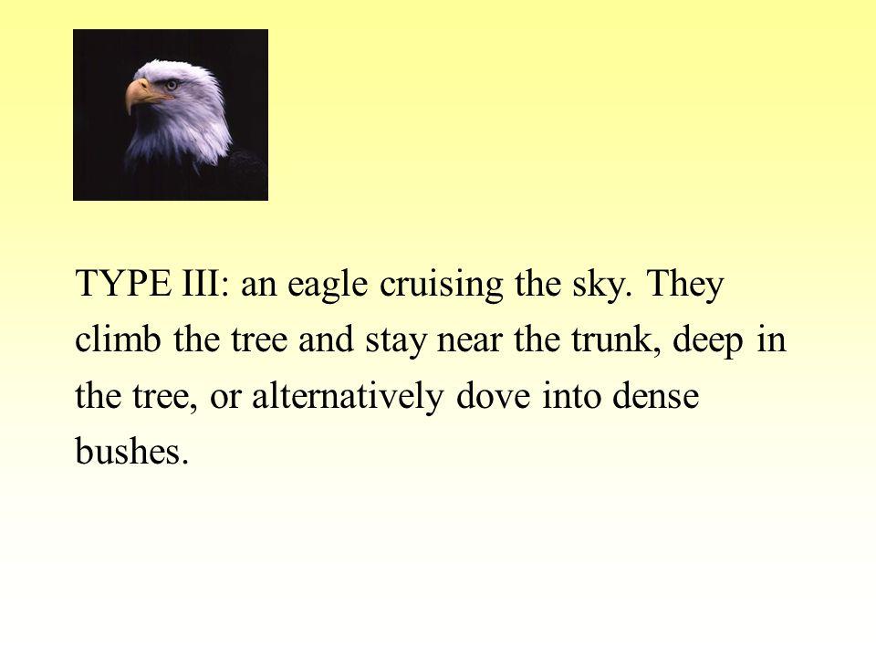 TYPE III: an eagle cruising the sky.