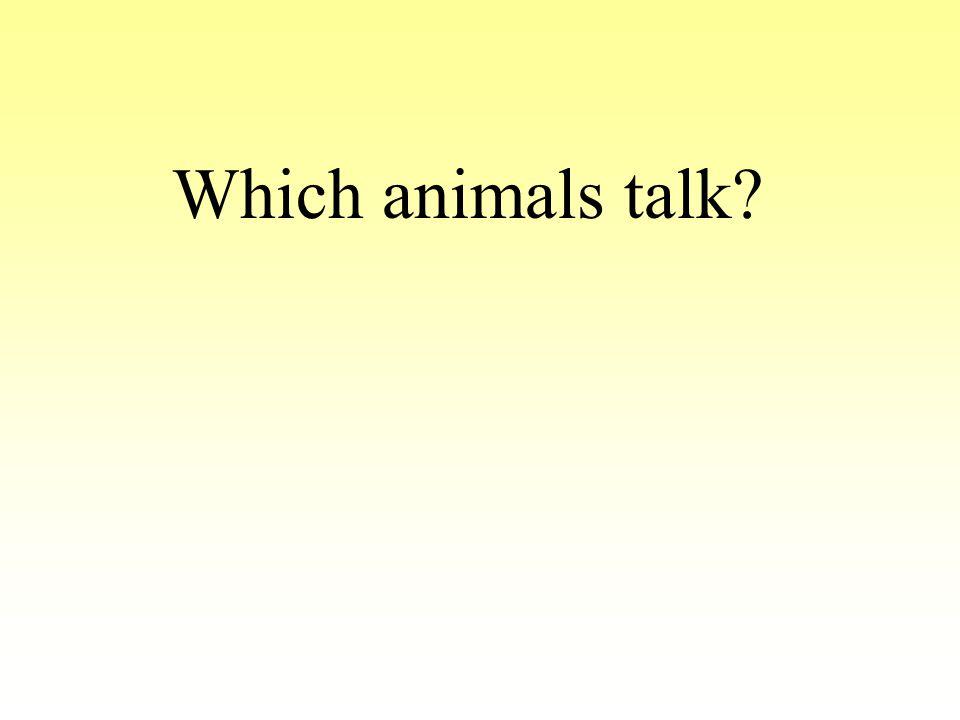 Which animals talk