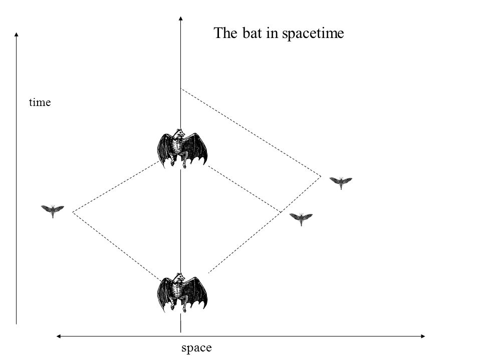 time space The bat in spacetime