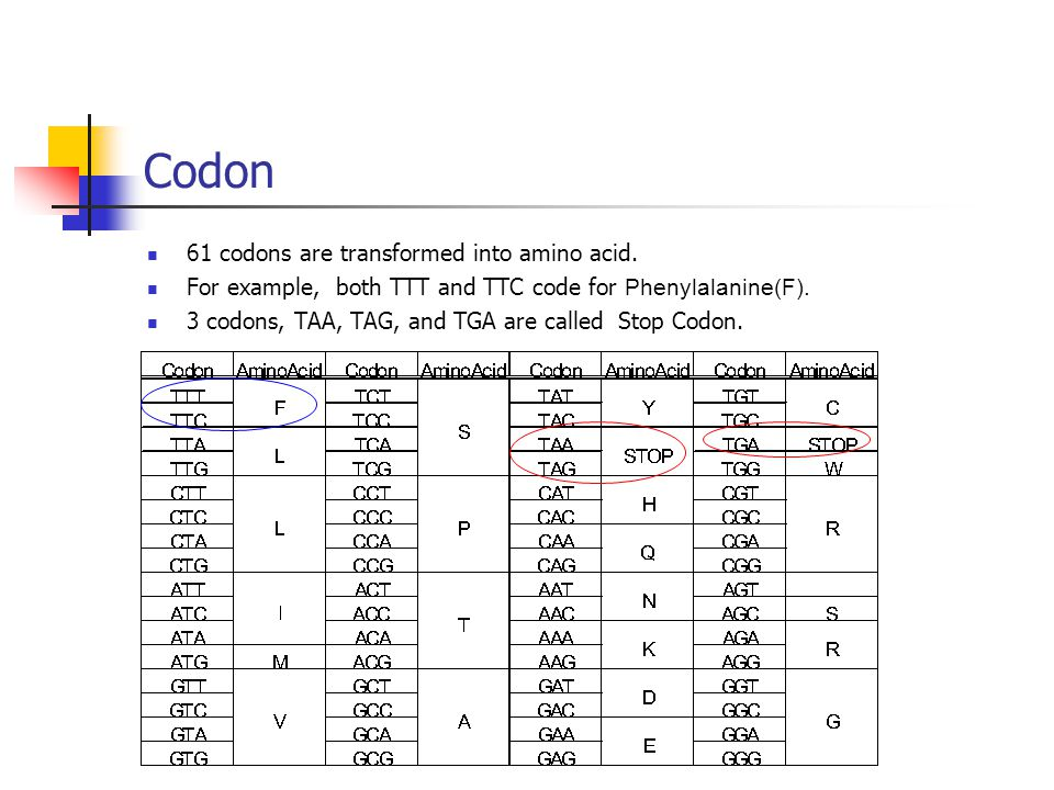 61 codons are transformed into amino acid. For example, both TTT and TTC code for Phenylalanine(F).