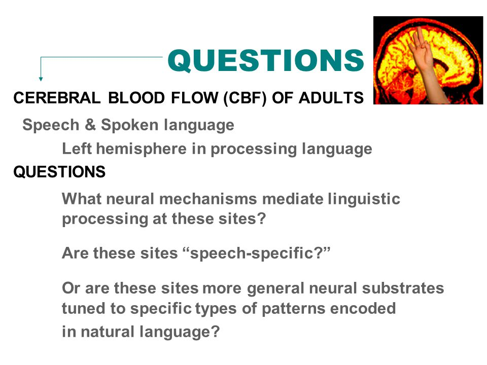 QUESTIONS CEREBRAL BLOOD FLOW (CBF) OF ADULTS Speech & Spoken language Left hemisphere in processing language QUESTIONS What neural mechanisms mediate linguistic processing at these sites.