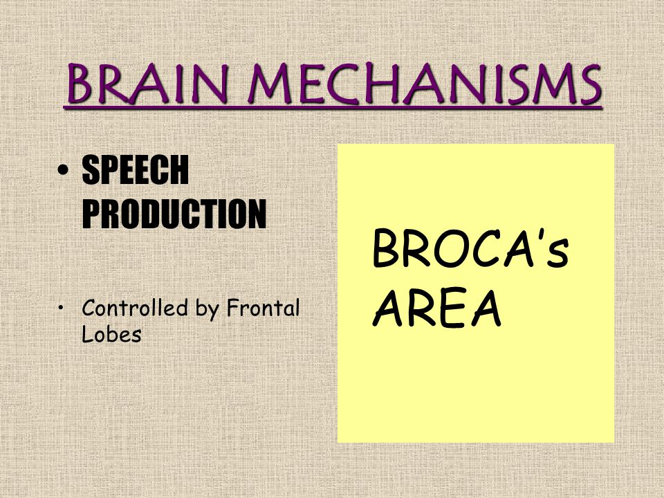BRAIN MECHANISMS SPEECH PRODUCTION Controlled by Frontal Lobes BROCA's AREA