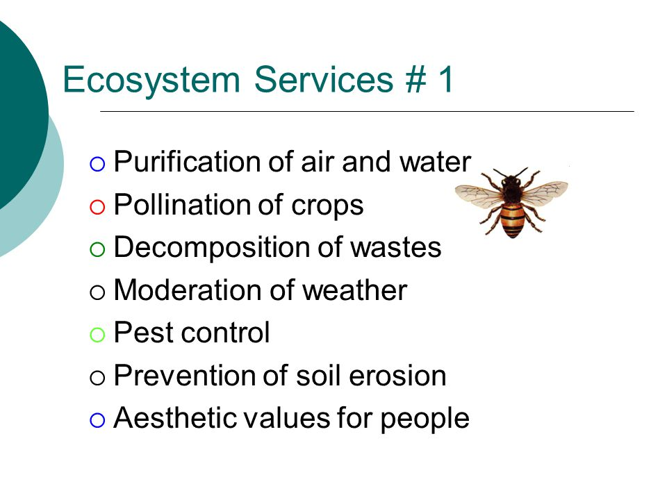 Ecosystem Services # 1  Purification of air and water  Pollination of crops  Decomposition of wastes  Moderation of weather  Pest control  Prevention of soil erosion  Aesthetic values for people