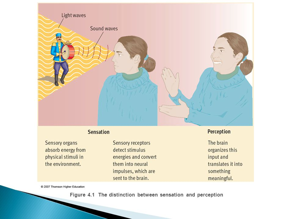 Figure 4.1 The distinction between sensation and perception