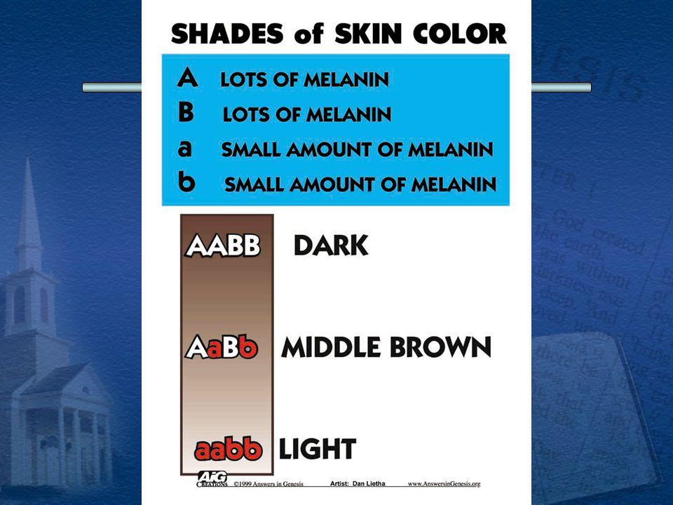 Shades skin color