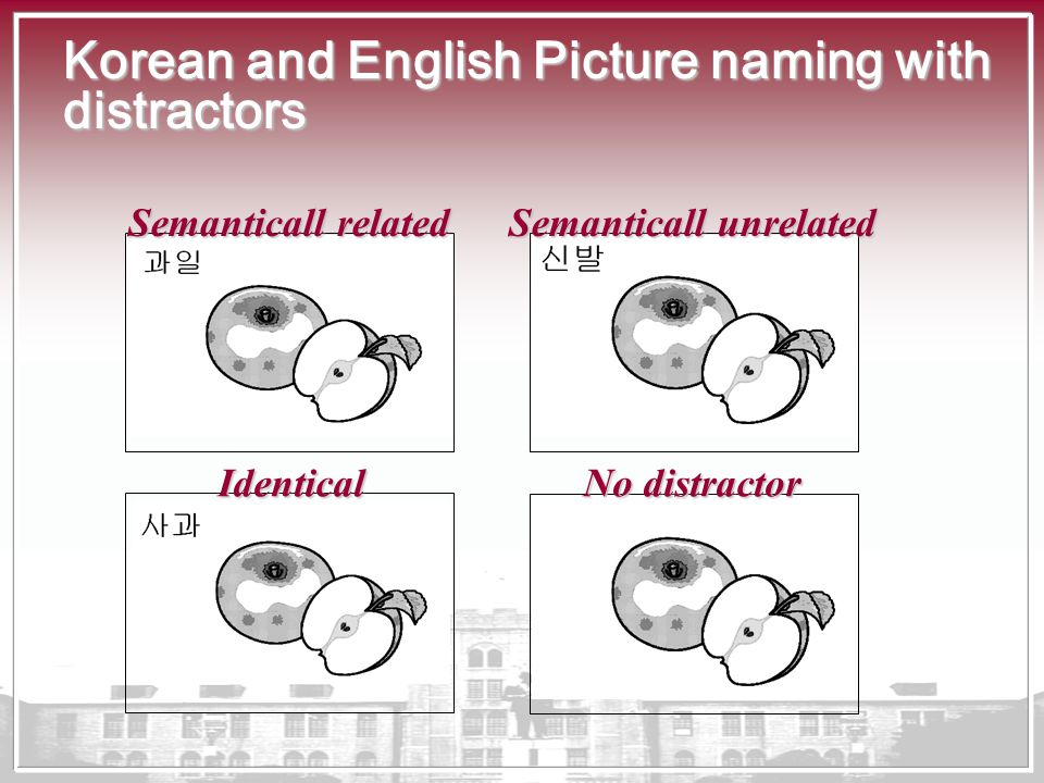 Korean and English Picture naming with distractors Semanticall related Semanticall unrelated Identical No distractor