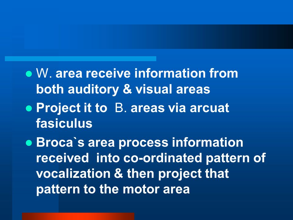 W.area receive information from both auditory & visual areas Project it to B.