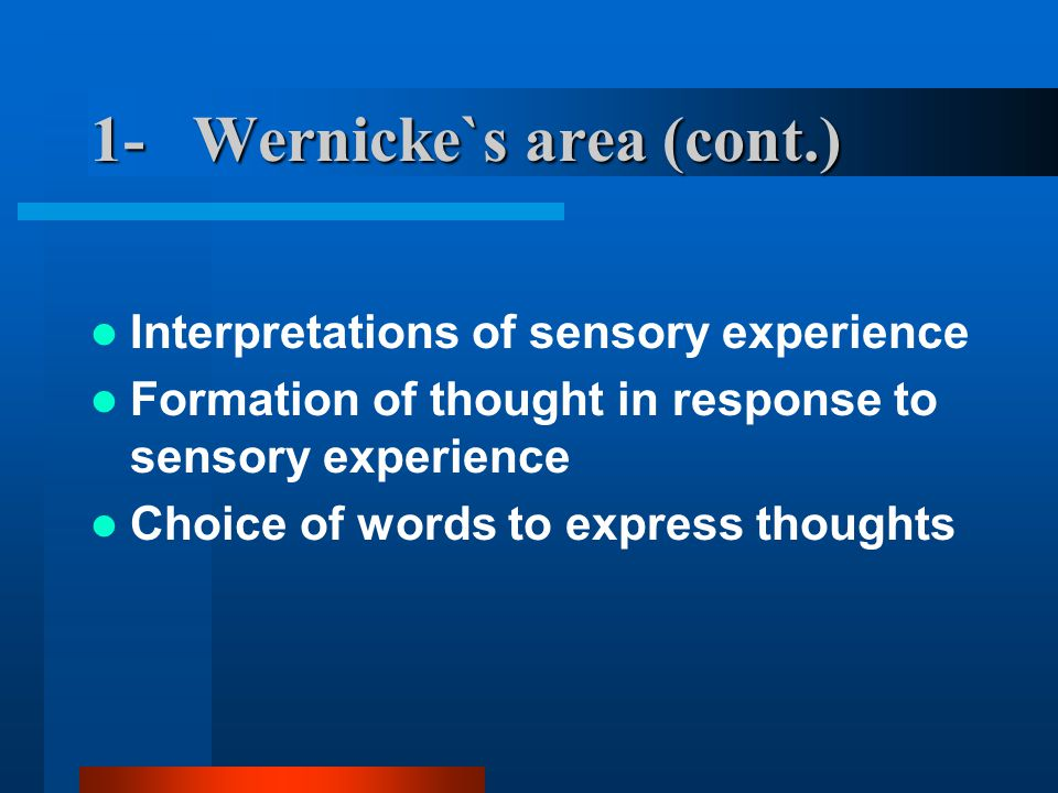 1- Wernicke`s area (cont.) Interpretations of sensory experience Formation of thought in response to sensory experience Choice of words to express thoughts
