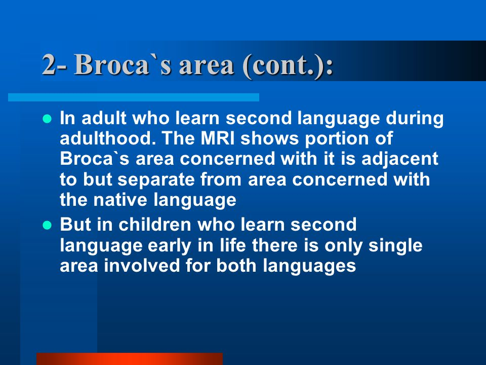 2- Broca`s area (cont.): In adult who learn second language during adulthood.