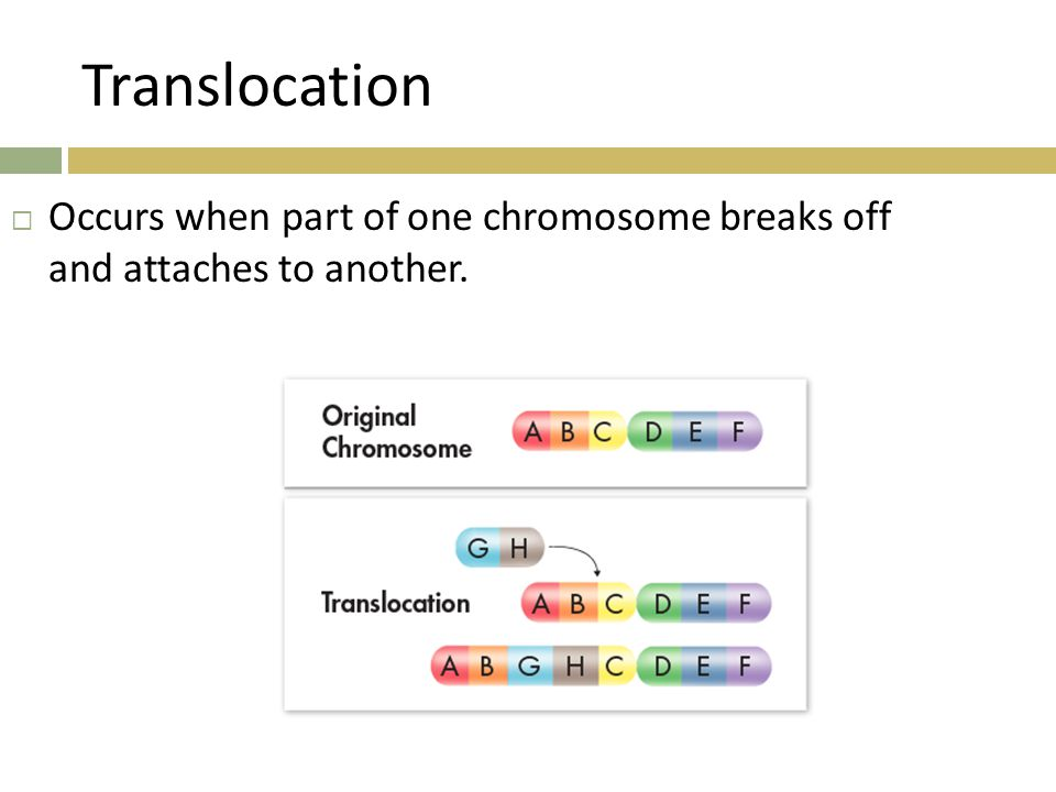 Translocation  Occurs when part of one chromosome breaks off and attaches to another.