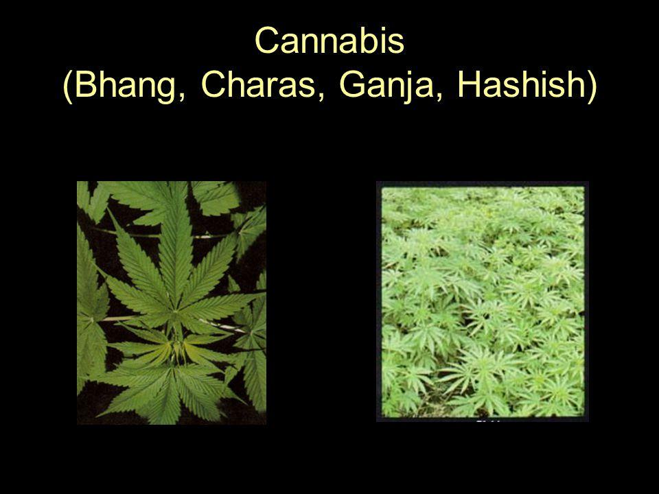 Cannabis (Bhang, Charas, Ganja, Hashish)