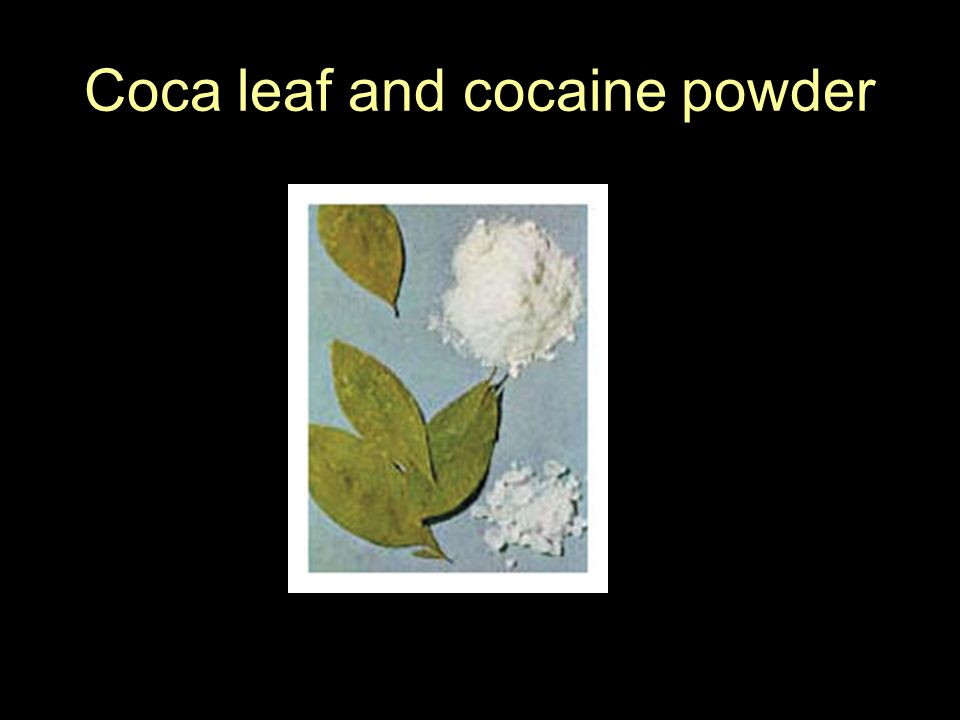 Coca leaf and cocaine powder