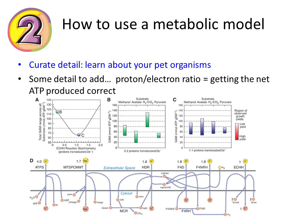 How to use a metabolic model Curate detail: learn about your pet organisms Some detail to add… proton/electron ratio = getting the net ATP produced correct