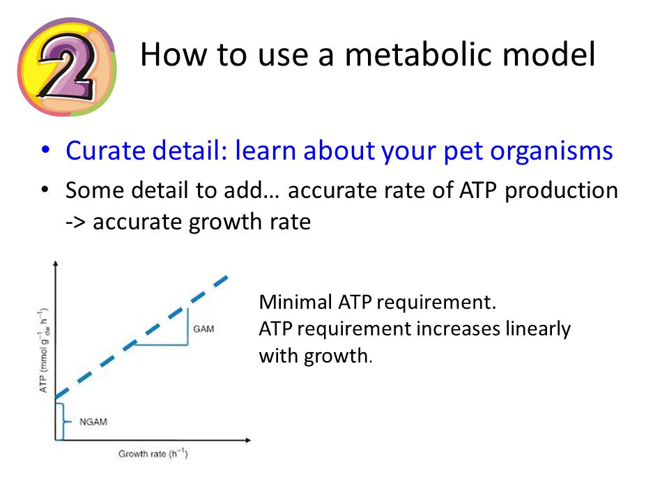How to use a metabolic model Curate detail: learn about your pet organisms Some detail to add… accurate rate of ATP production -> accurate growth rate Minimal ATP requirement.