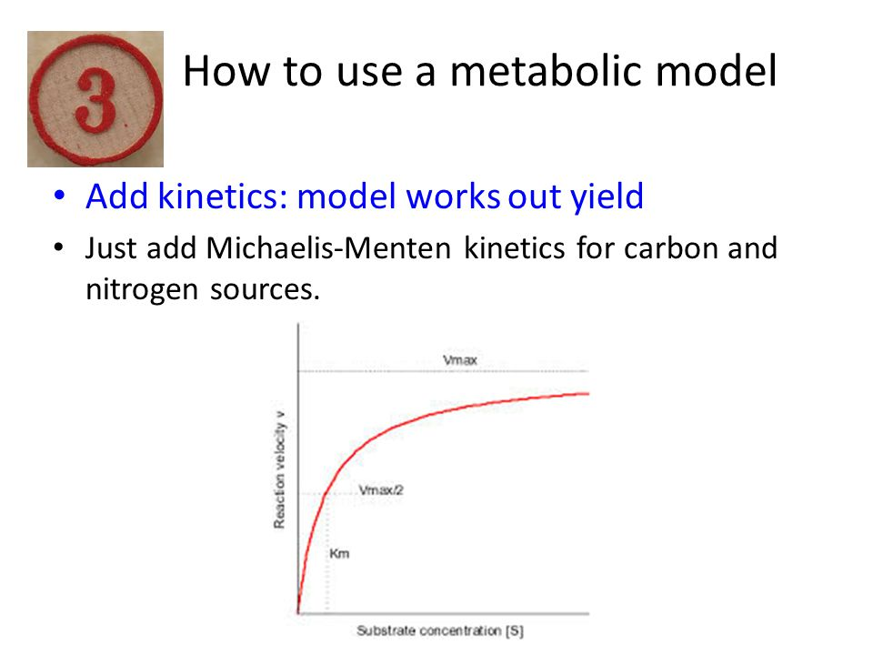 How to use a metabolic model Add kinetics: model works out yield Just add Michaelis-Menten kinetics for carbon and nitrogen sources.