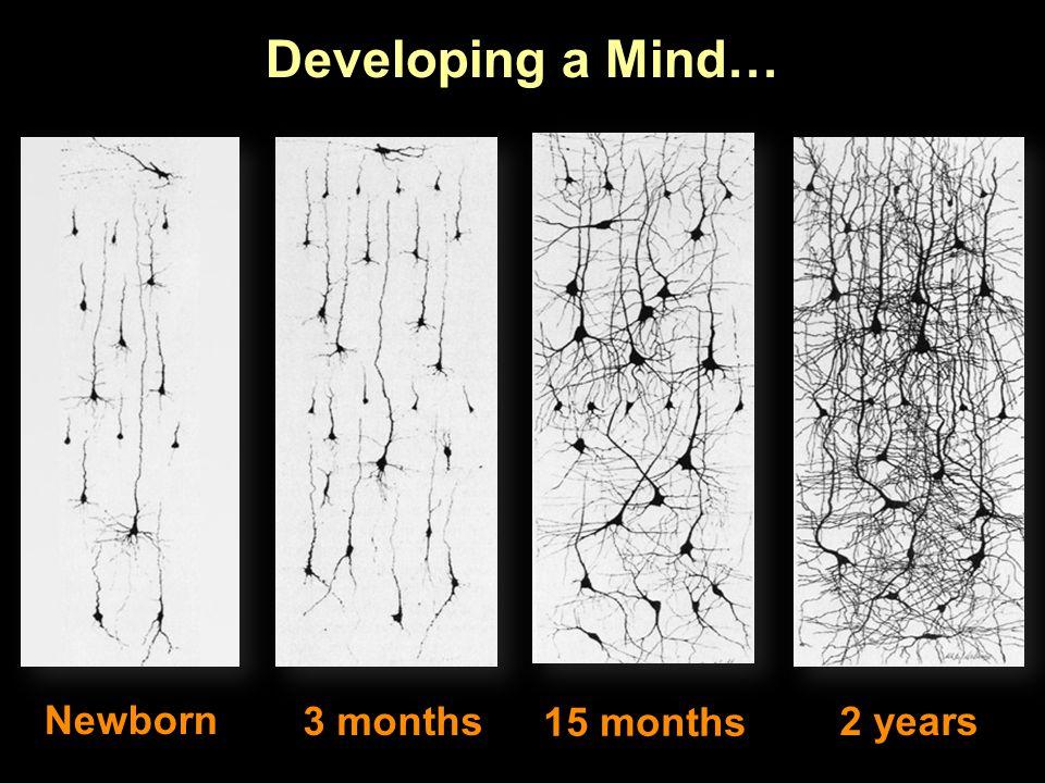 Developing a Mind… Newborn 3 months 15 months 2 years
