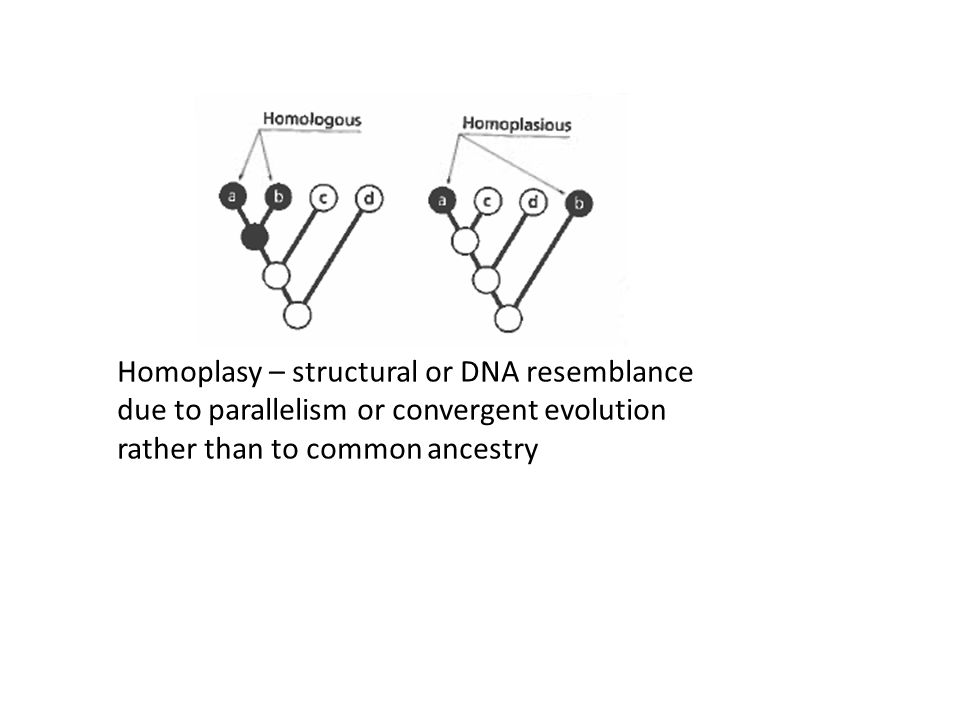 Homoplasy – structural or DNA resemblance due to parallelism or convergent evolution rather than to common ancestry