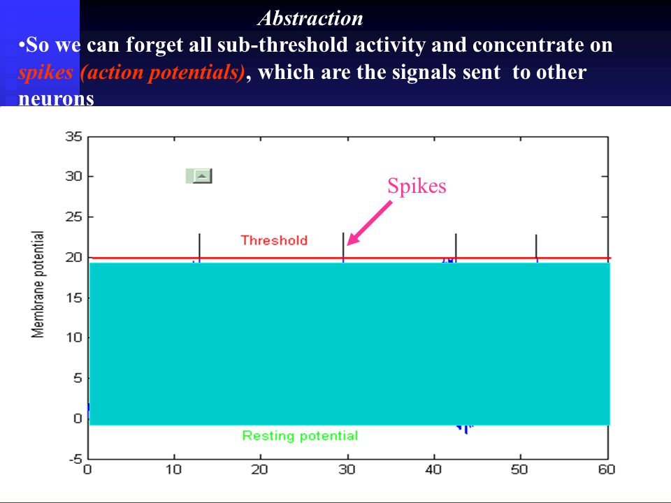 18 Single neuron activity A spike is generated when the membrane potential is greater than its threshold