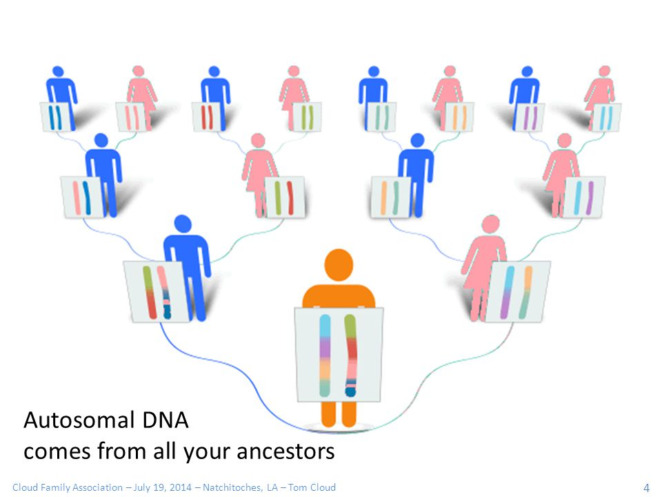 Cloud Family Association – July 19, 2014 – Natchitoches, LA – Tom Cloud 4 Autosomal DNA comes from all your ancestors
