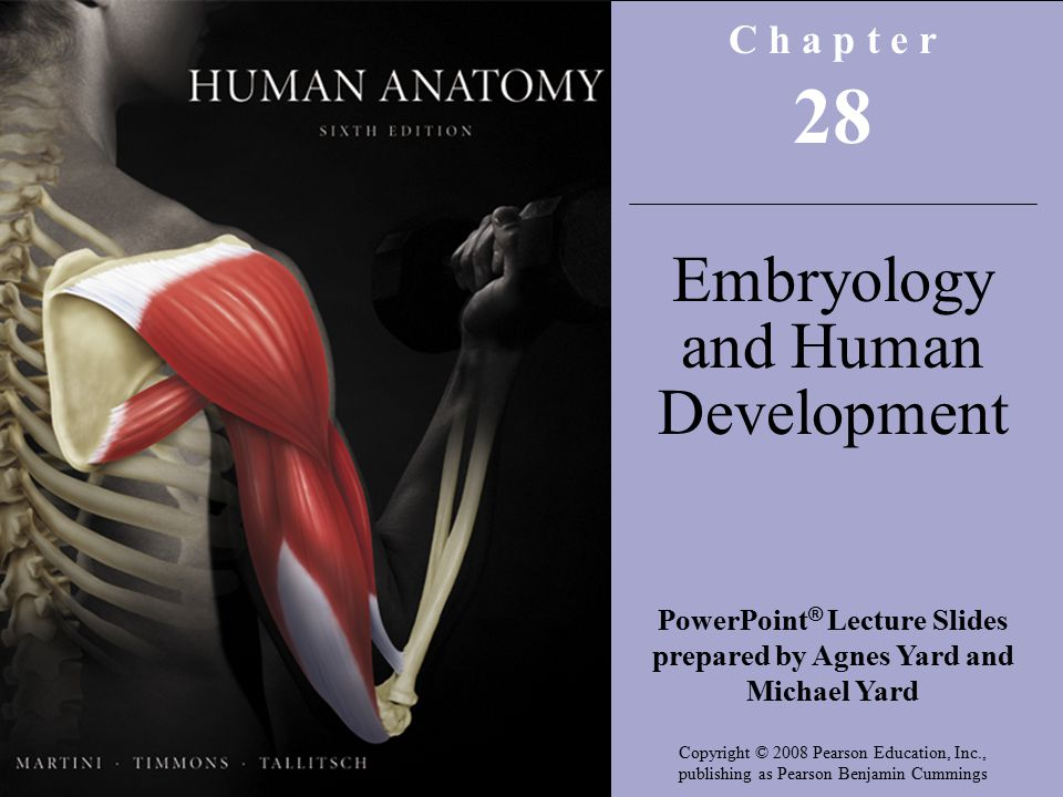 Copyright © 2008 Pearson Education, Inc., publishing as Benjamin Cummings C h a p t e r 28 Embryology and Human Development PowerPoint ® Lecture Slides prepared by Agnes Yard and Michael Yard Copyright © 2008 Pearson Education, Inc., publishing as Pearson Benjamin Cummings