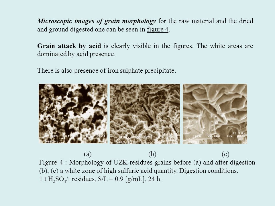 Microscopic images of grain morphology for the raw material and the dried and ground digested one can be seen in figure 4. Grain attack by acid is cle
