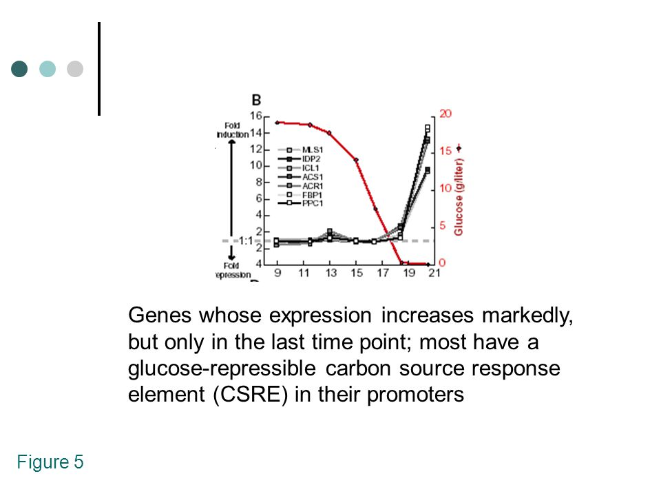 Figure 5 Genes whose expression increases markedly, but only in the last time point; most have a glucose-repressible carbon source response element (C