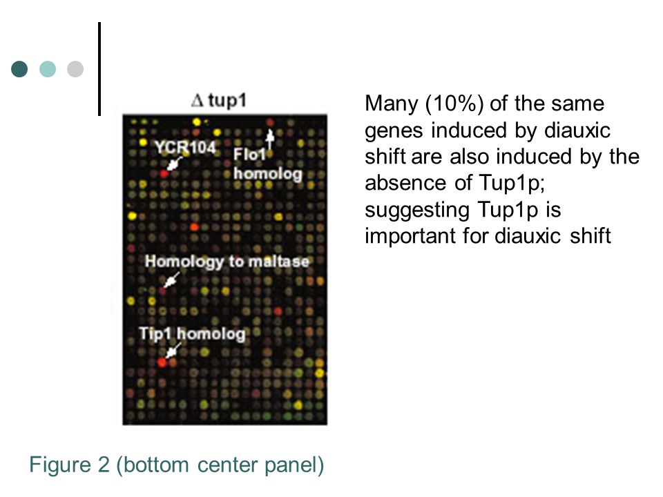 Figure 2 (bottom center panel) Many (10%) of the same genes induced by diauxic shift are also induced by the absence of Tup1p; suggesting Tup1p is imp
