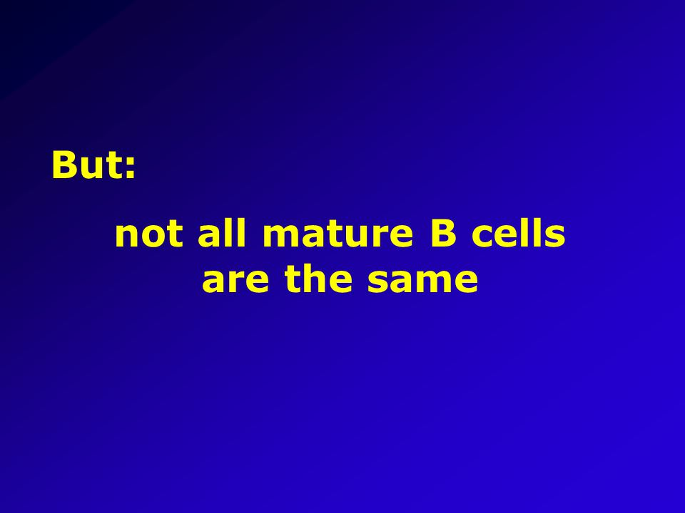 But: not all mature B cells are the same