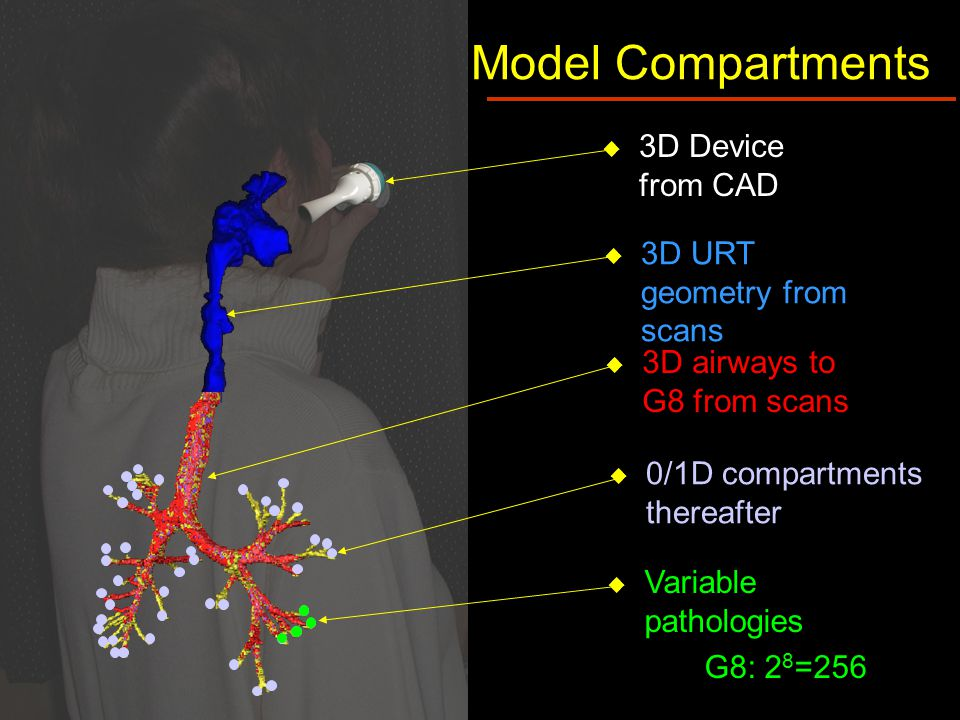  3D Device from CAD Model Compartments  3D airways to G8 from scans  0/1D compartments thereafter  Variable pathologies G8: 2 8 =256  3D URT geometry from scans