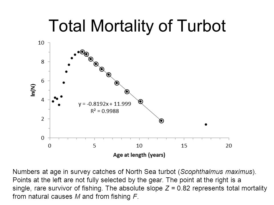 Total Mortality of Turbot Numbers at age in survey catches of North Sea turbot (Scophthalmus maximus). Points at the left are not fully selected by th