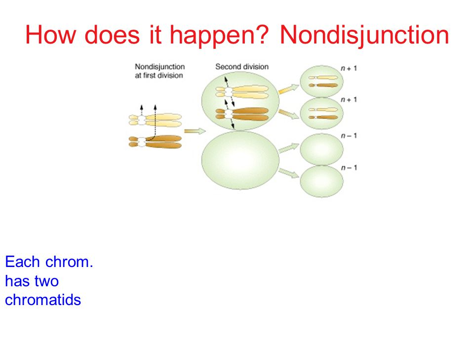 How does it happen? Nondisjunction Each chrom. has two chromatids