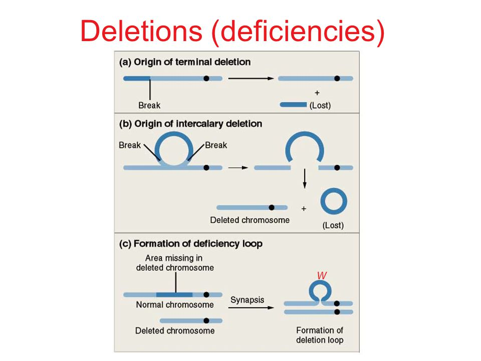 w Deletions (deficiencies)