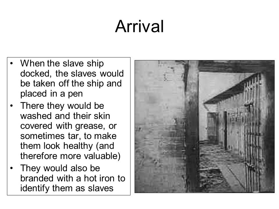 Arrival When the slave ship docked, the slaves would be taken off the ship and placed in a pen There they would be washed and their skin covered with grease, or sometimes tar, to make them look healthy (and therefore more valuable) They would also be branded with a hot iron to identify them as slaves