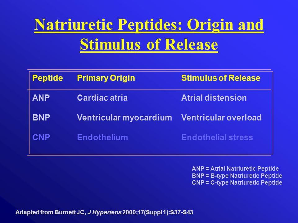 Natriuretic Peptides: Origin and Stimulus of Release Adapted from Burnett JC, J Hypertens 2000;17(Suppl 1):S37-S43 ANP = Atrial Natriuretic Peptide BNP = B-type Natriuretic Peptide CNP = C-type Natriuretic Peptide PeptidePrimary OriginStimulus of Release ANPCardiac atriaAtrial distension BNPVentricular myocardiumVentricular overload CNPEndothelium Endothelial stress