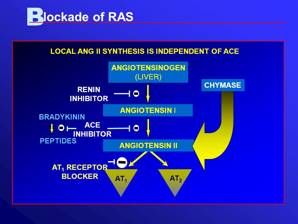 B lockade of RAS ANGIOTENSIN I ANGIOTENSINOGEN (LIVER) AT 1 AT 2 ANGIOTENSIN II ACE INHIBITOR AT 1 RECEPTOR BLOCKER RENIN INHIBITOR BRADYKININ PEPTIDES CHYMASE LOCAL ANG II SYNTHESIS IS INDEPENDENT OF ACE