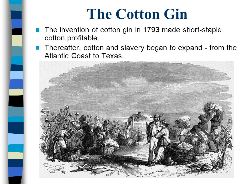 The Cotton Gin The invention of cotton gin in 1793 made short-staple cotton profitable. Thereafter, cotton and slavery began to expand - from the Atla