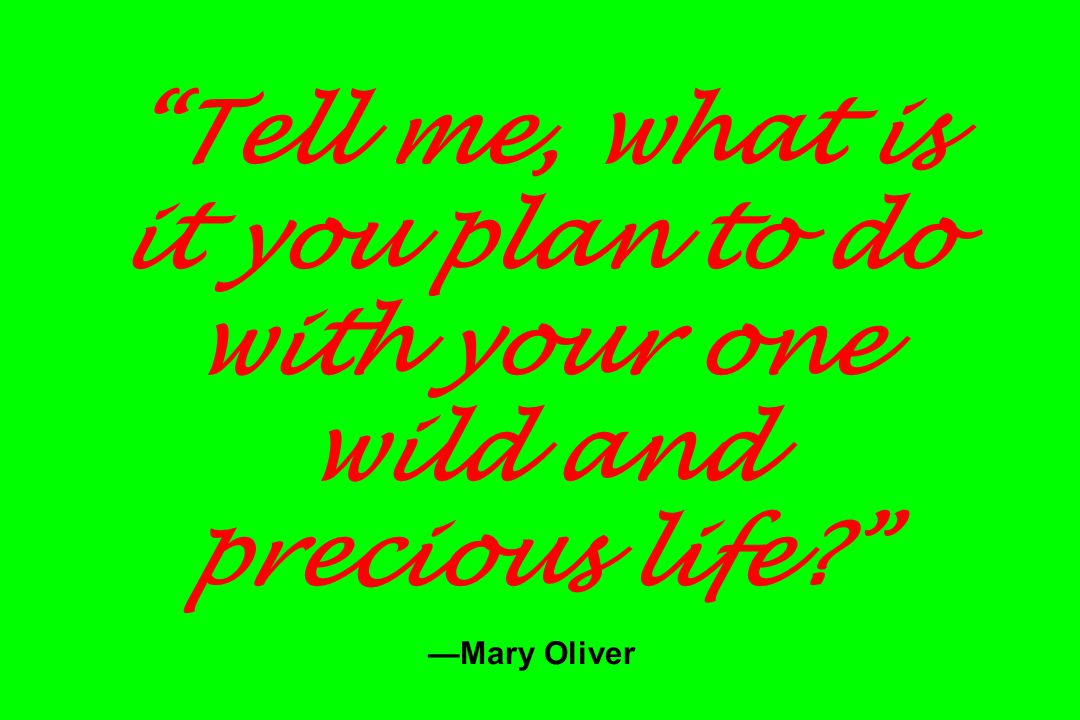 Tell me, what is it you plan to do with your one wild and precious life? —Mary Oliver