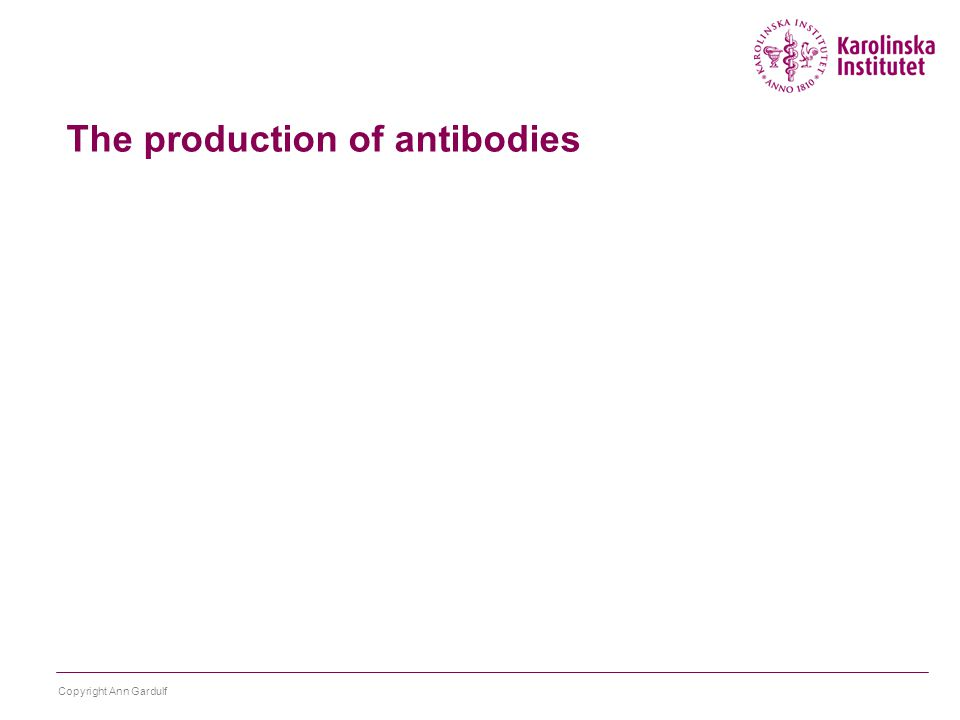 The production of antibodies Copyright Ann Gardulf