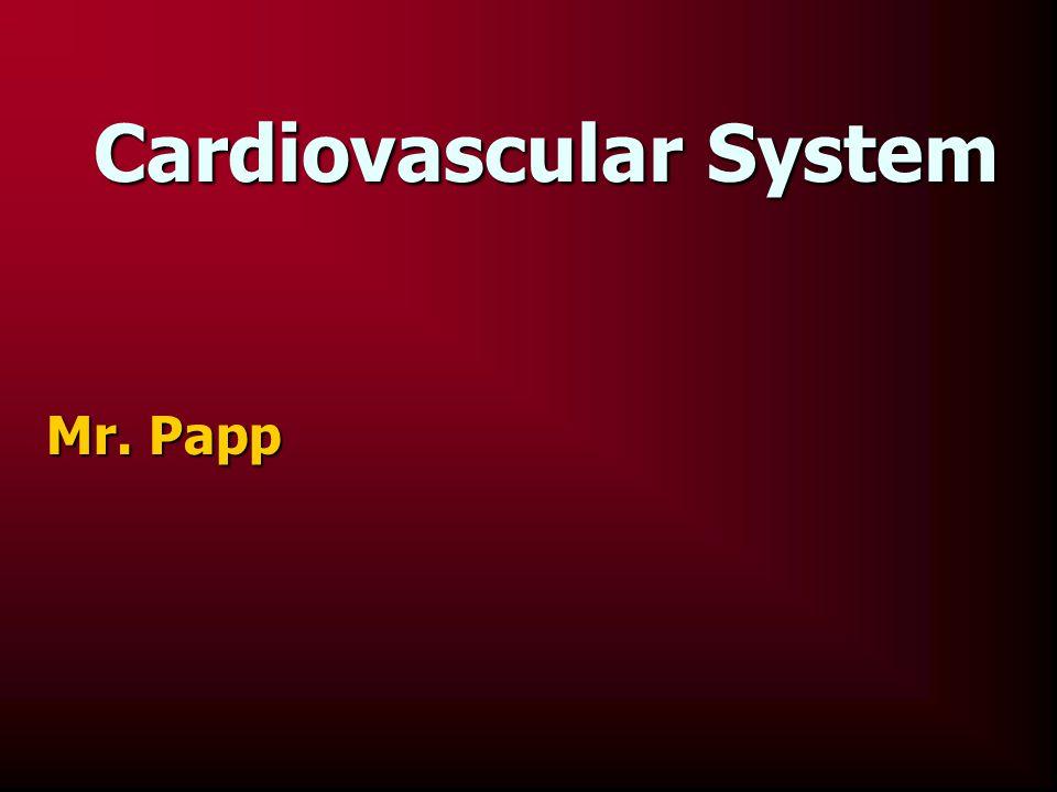 Cardiovascular System Mr. Papp