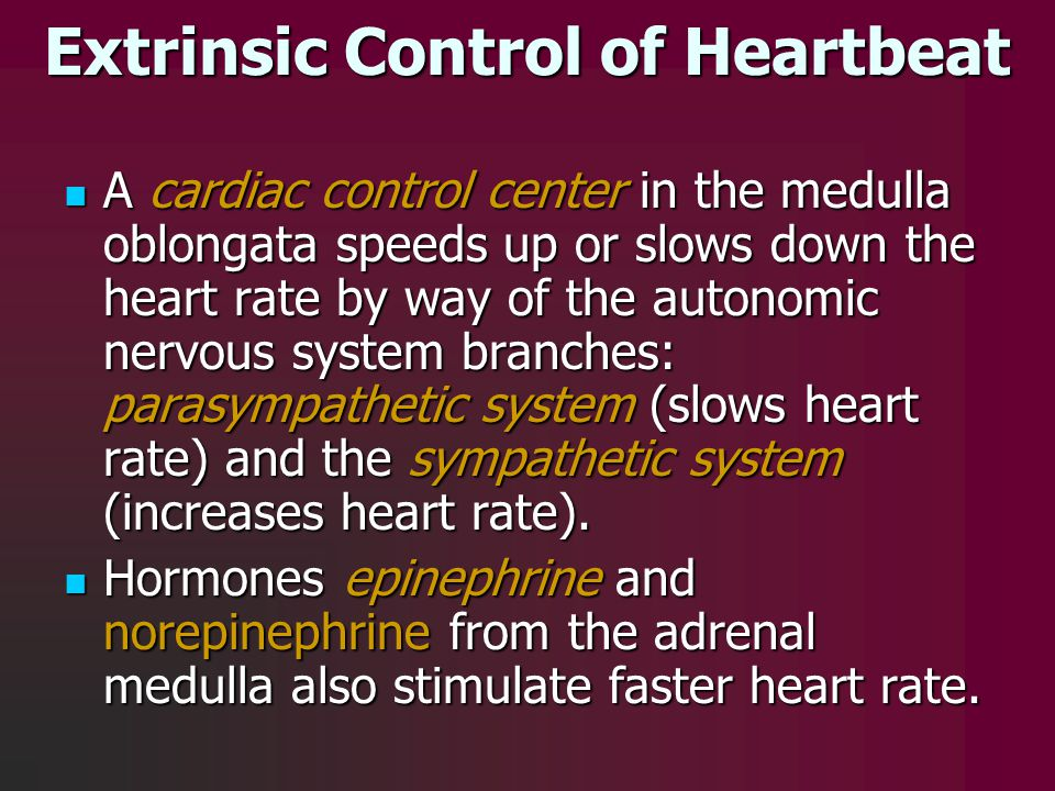 Extrinsic Control of Heartbeat A cardiac control center in the medulla oblongata speeds up or slows down the heart rate by way of the autonomic nervou