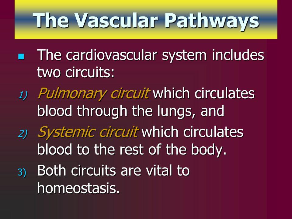 The Vascular Pathways The cardiovascular system includes two circuits: The cardiovascular system includes two circuits: 1) Pulmonary circuit which cir
