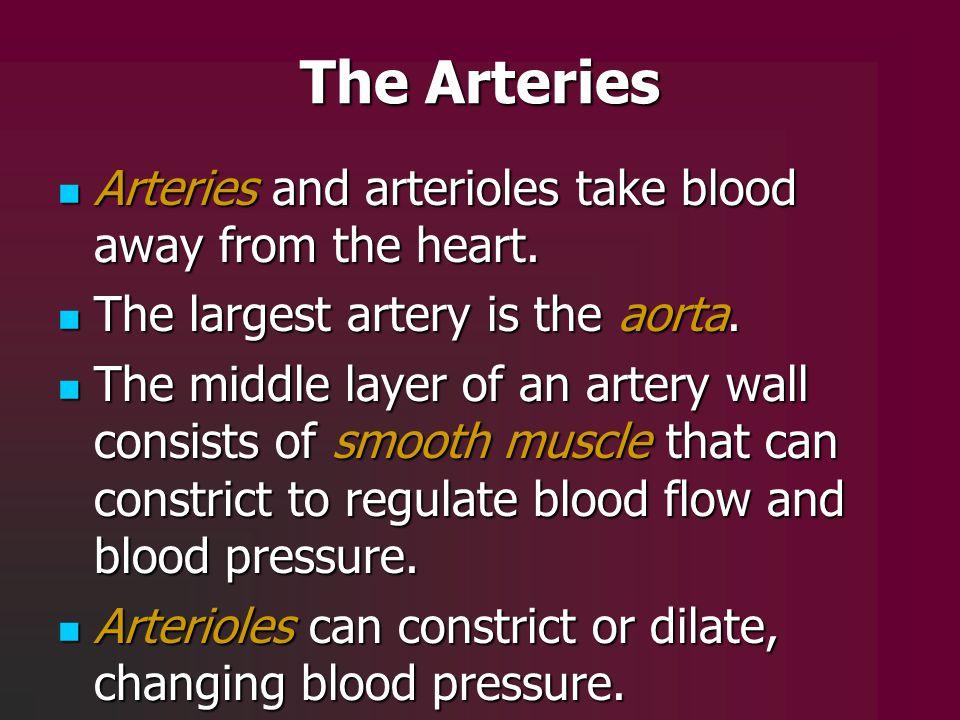 The Arteries Arteries and arterioles take blood away from the heart. Arteries and arterioles take blood away from the heart. The largest artery is the