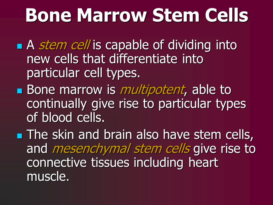 Bone Marrow Stem Cells A stem cell is capable of dividing into new cells that differentiate into particular cell types. A stem cell is capable of divi
