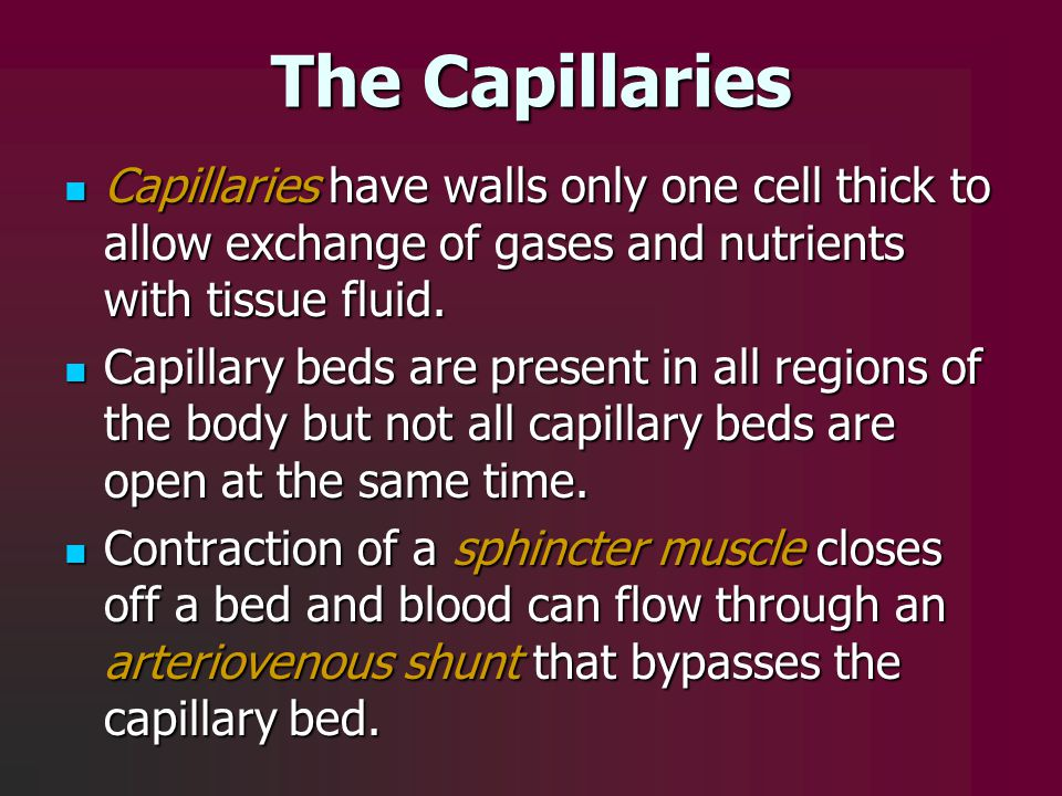 The Capillaries Capillaries have walls only one cell thick to allow exchange of gases and nutrients with tissue fluid. Capillaries have walls only one