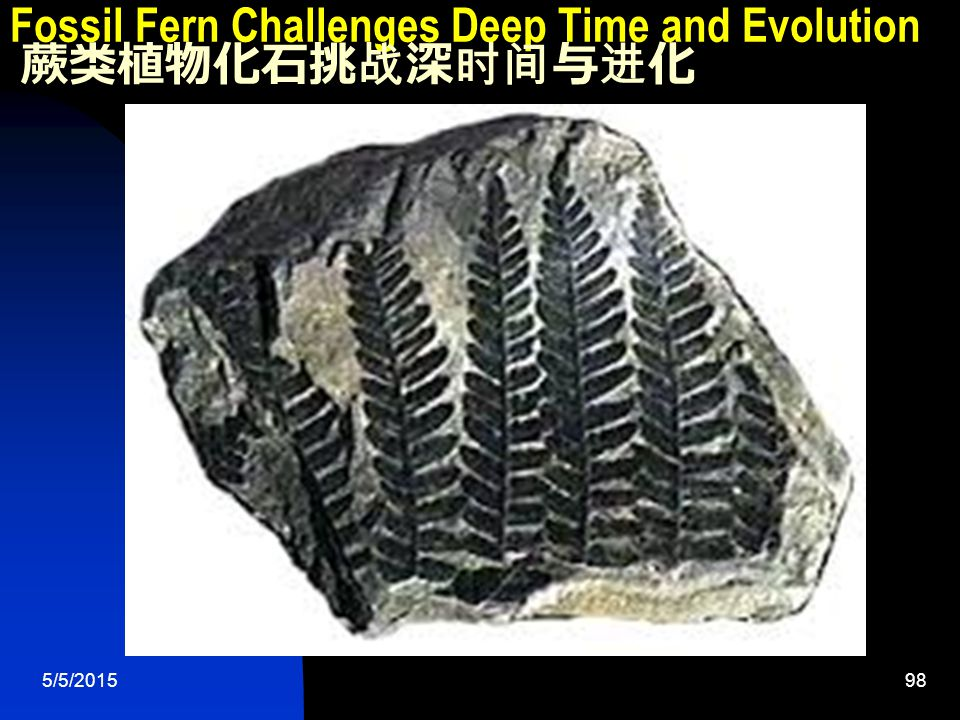 5/5/201598 Fossil Fern Challenges Deep Time and Evolution 蕨类植物化石挑战深时间与进化
