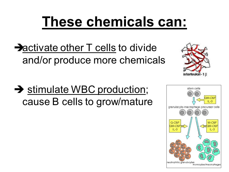 These chemicals can:  activate other T cells to divide and/or produce more chemicals  stimulate WBC production; cause B cells to grow/mature