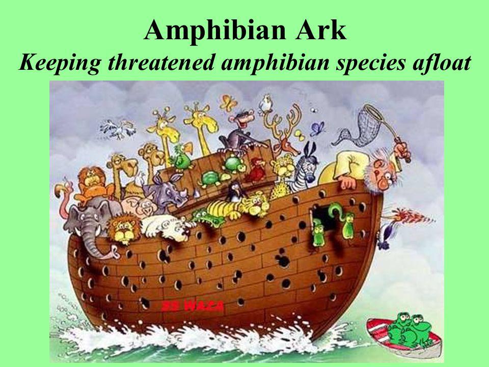 Amphibian Ark Keeping threatened amphibian species afloat
