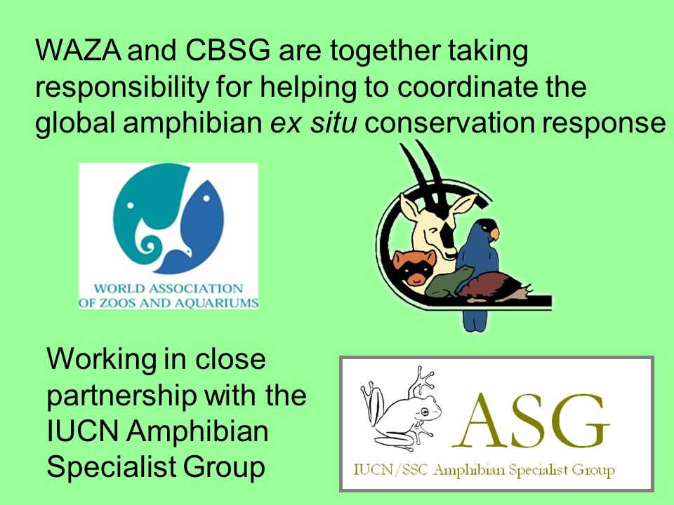 Working in close partnership with the IUCN Amphibian Specialist Group